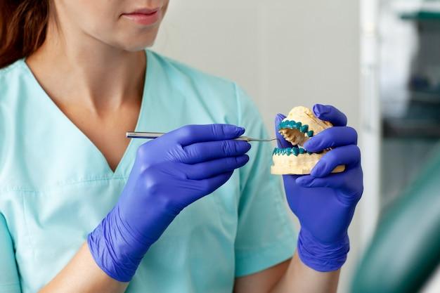Dentiste tient un modèle en plâtre des mâchoires dans le cabinet dentaire
