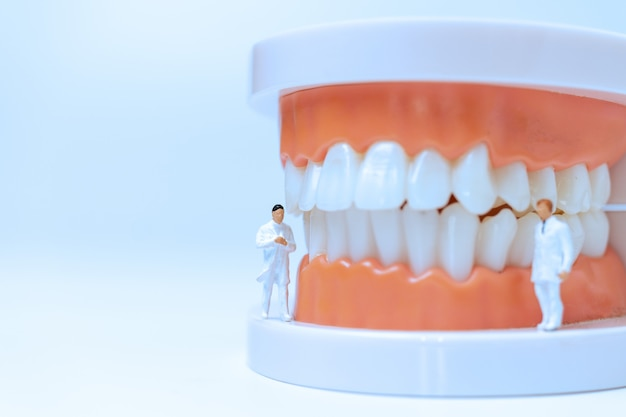 Dentistes miniatures observant et discutant des dents humaines avec des gencives