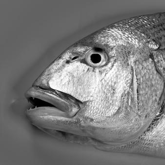Denton, poisson sparus méditerranéen, dorade, vivaneau