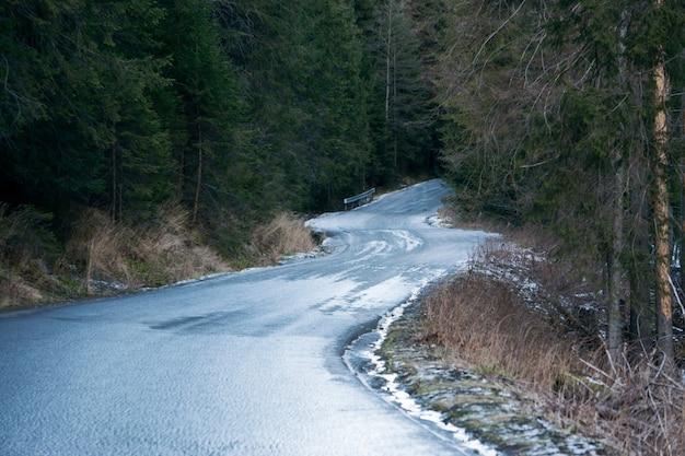 Descente raide. route mouillée dans la forêt