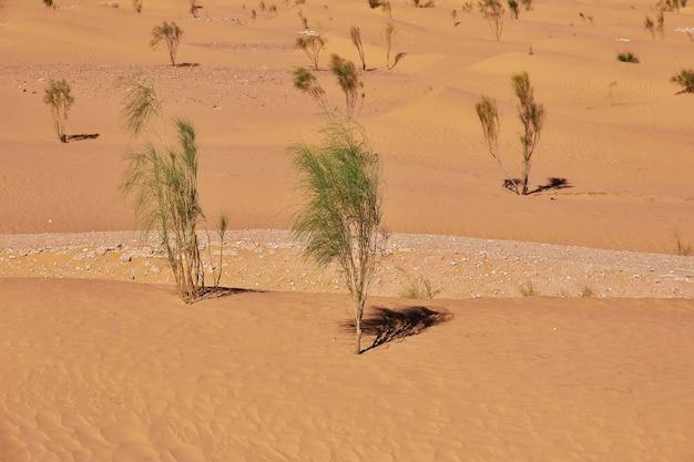 Désert du sahara au cœur de l'afrique