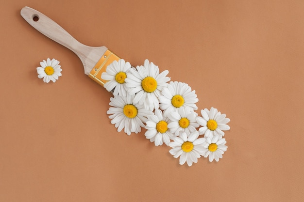Dessin au pinceau avec des fleurs de camomille sur fond marron. le concept du printemps et de la journée internationale de la femme le 8 mars.