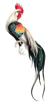 Dessin en couleur avec des crayons aquarelle. coq sur fond blanc.