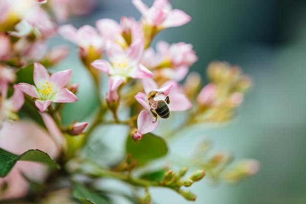 Détail d'une abeille en fleur
