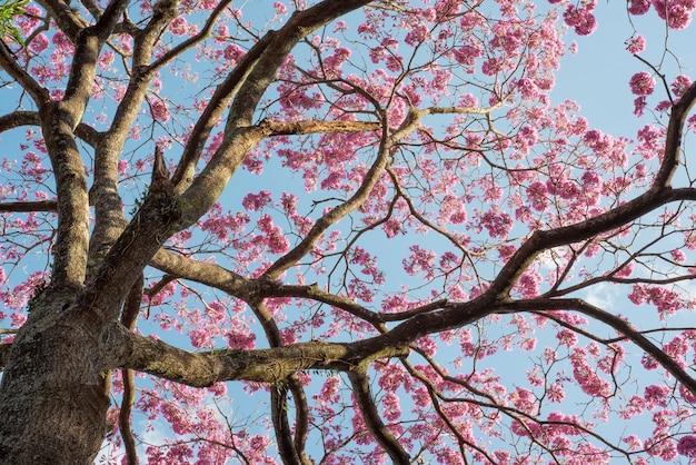 Détail d'un arbre montrant des branches et des fleurs roses.