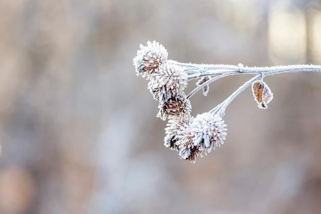 Détail d'un arbuste gelé sur un matin d'hiver glacial
