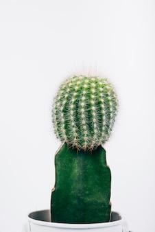 Détail coup de plante de cactus vert en pot sur fond blanc