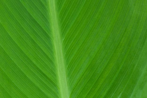 Détail détaillé de fond de feuilles vertes nature.