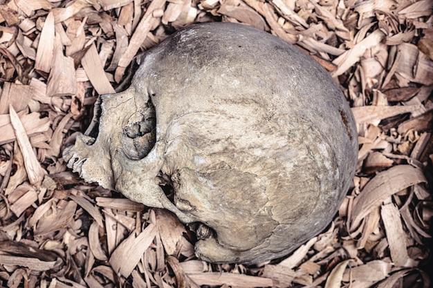 Détail du crâne humain sur des copeaux de bois.