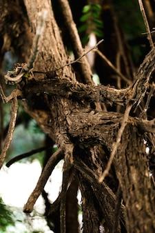 Détail du tronc en bois marron