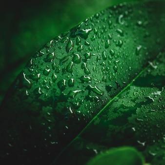 Détail d'une feuille verte