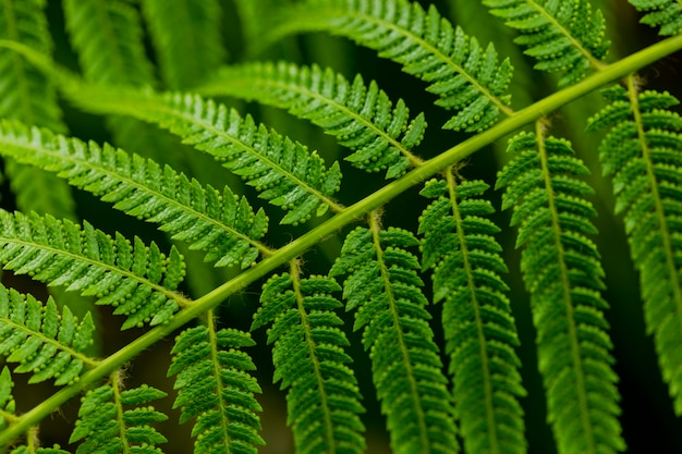 Détail des feuilles de fougère