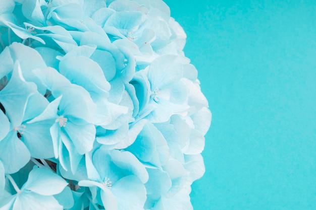 Détail de la fleur d'hortensias turquoise