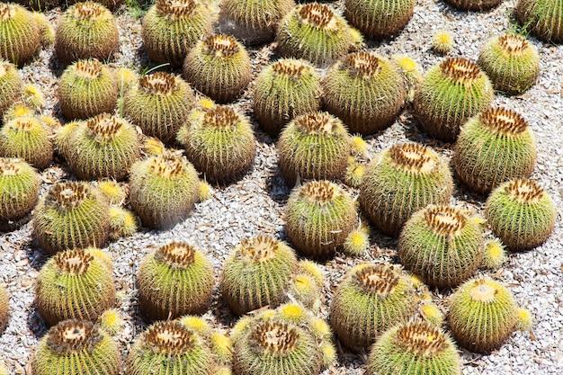 Détail d'un jardin de cactus, utile aussi pour les concepts