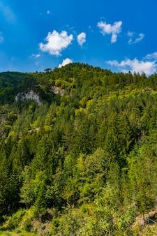 Détail de la montagne tara en serbie