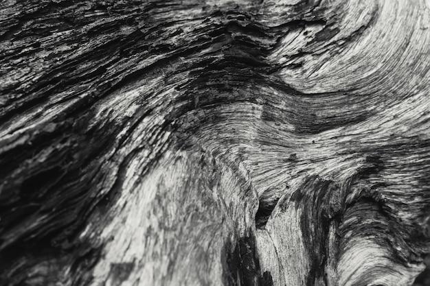 Détail de la photographie d'art de nature en bois mort texture bois noir et blanc.