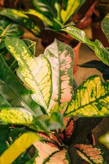 Détail de la plante laisse dans le pot