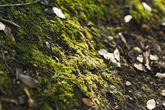 Détail de plantes vertes et de mousse sur une pierre dans la forêt
