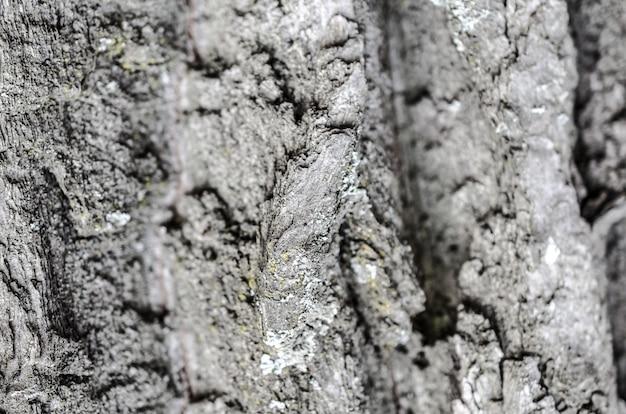 Détail de la texture de l'écorce des arbres