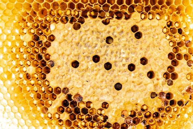 Détail texturé de nid d'abeille ou fond de ruche