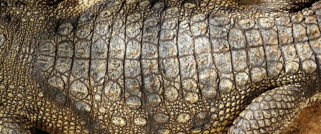 Détail de la texture de la peau réelle de crocodile vivante