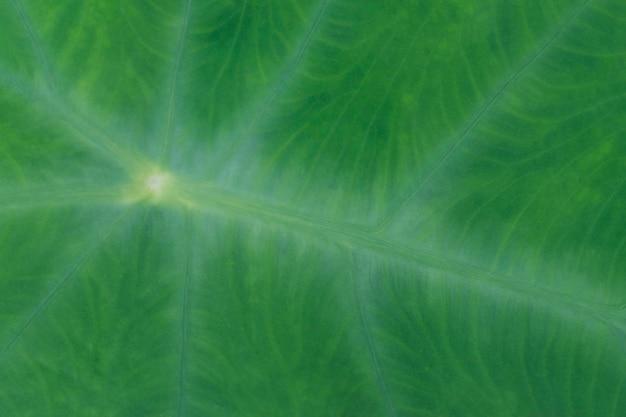 Détail de la texture de la plante des feuilles, fond