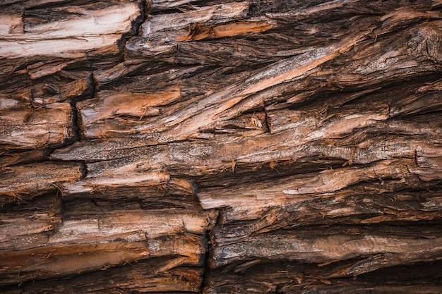 Détail d'un tronc brun