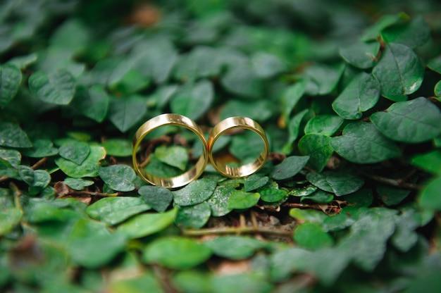 Détails. anneaux de mariage. feuilles automne nature soleil.