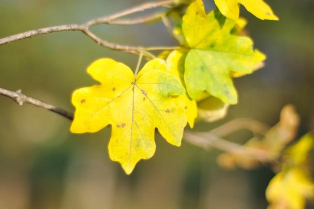Détails de l'automne, feuilles, couleurs, jaune, marron et autres