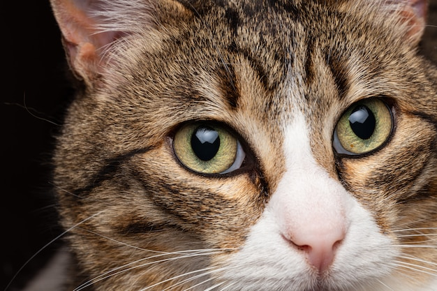 Détails du visage chat dans la maison