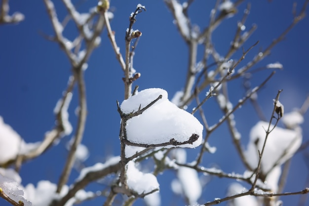 Détails de la nature hivernale dans la campagne en europe de l'est. branches d'arbres couvertes de neige en journée froide et ensoleillée.
