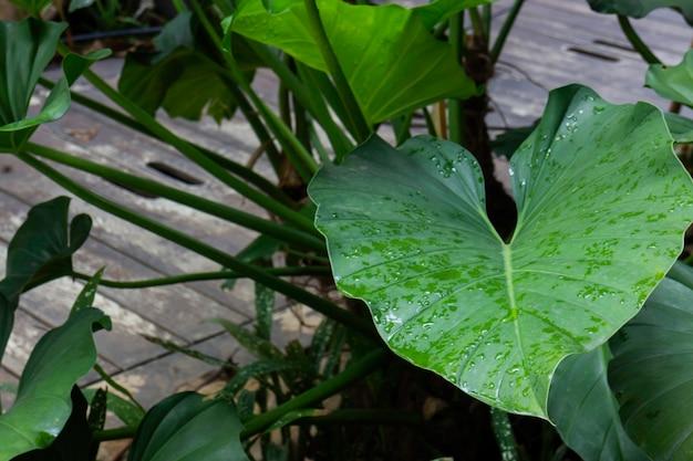 Détendu au marché des plantes en plein air, stock photo