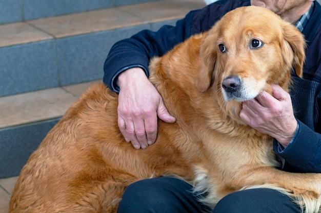 Détourne le regard, chien triste de race golden retriever, retraité embrasse son labrador de compagnie.