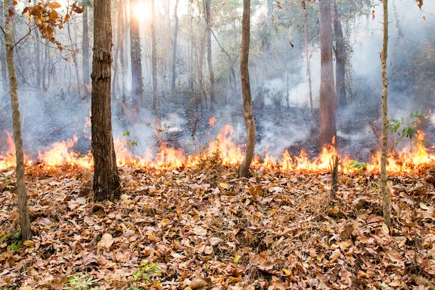 Détruit par la combustion de la forêt tropicale, thaïlande