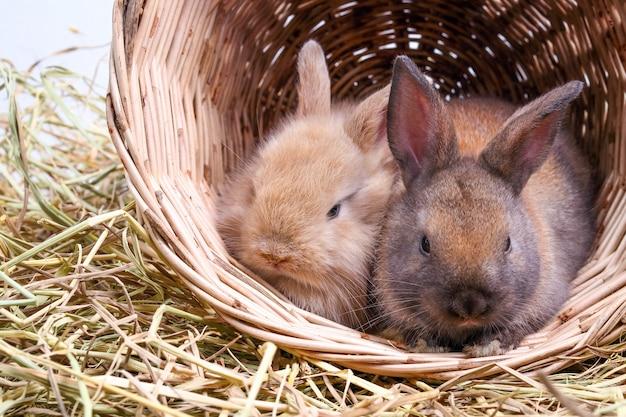 Deux adorables petits lapins aiment jouer malicieusement dans des paniers de bois et de paille.