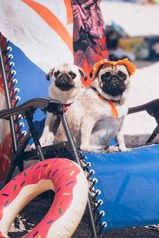 Deux Amis Du Chien De Race Pug Se Reposent Sur Une Plage Photo Premium