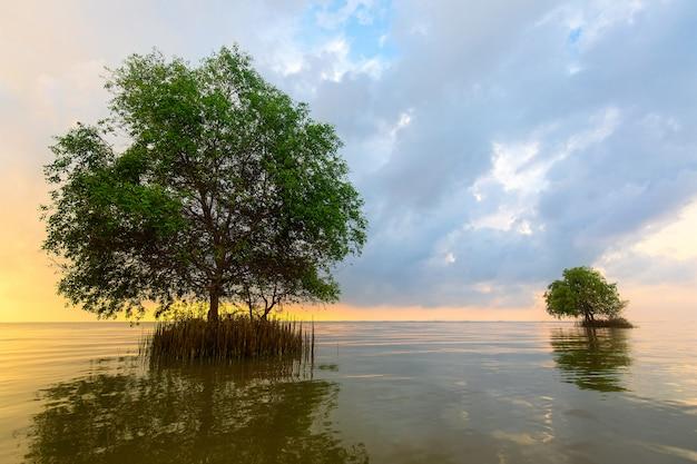 Deux arbre en mer