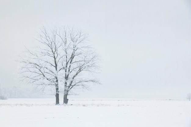 Deux arbres solitaires dans un champ d'hiver un matin brumeux. paysage d'hiver