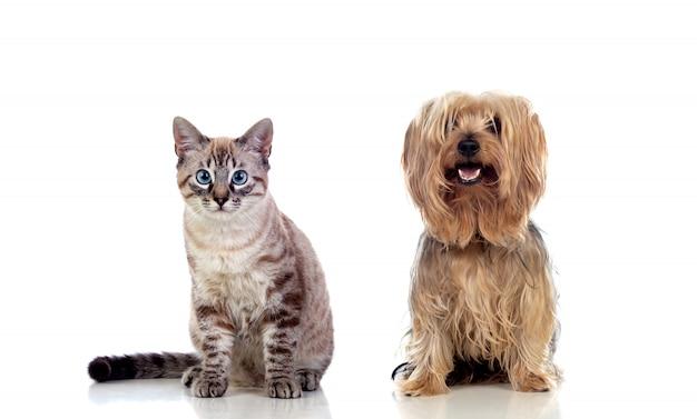 Deux beaux animaux de compagnie