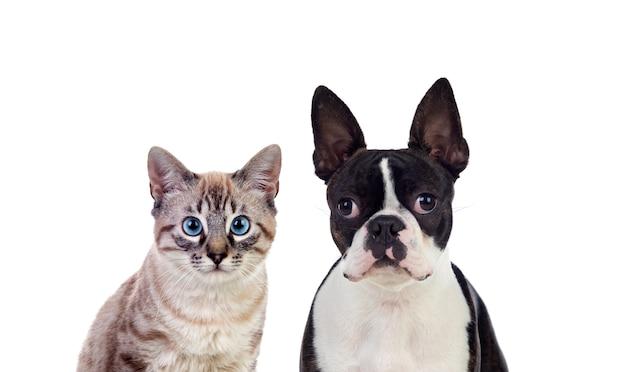 Deux beaux animaux domestiques posant