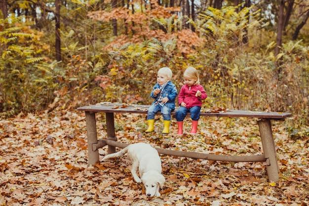 Deux beaux petits enfants assis sur le banc dans le parc en automne et nourrissant le chien