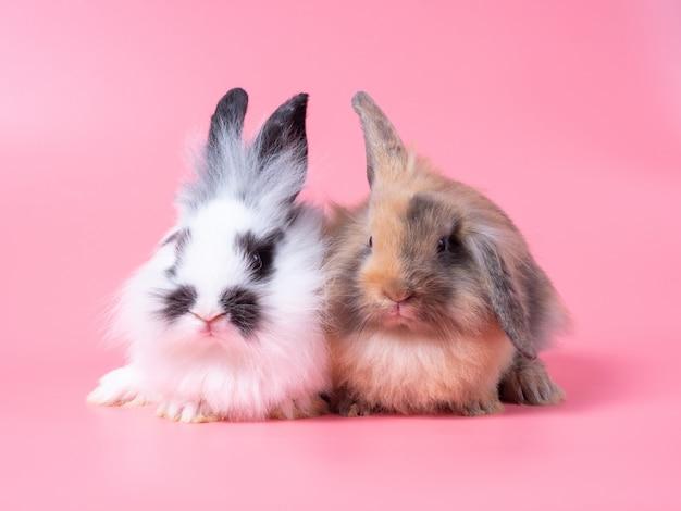 Deux bébés lapins mignons assis sur un mur rose
