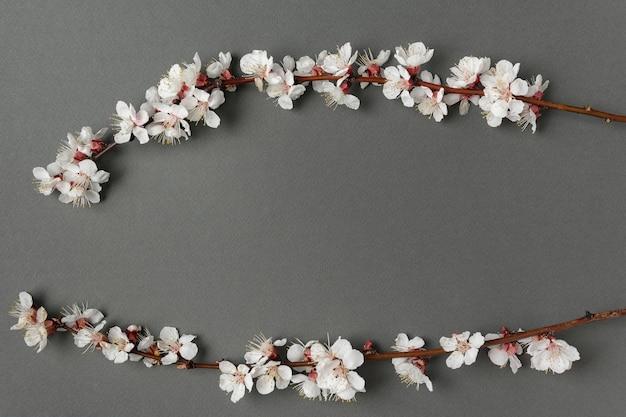 Deux branches de fleurs sur fond gris. copiez l'espace. toile de fond. maquette.