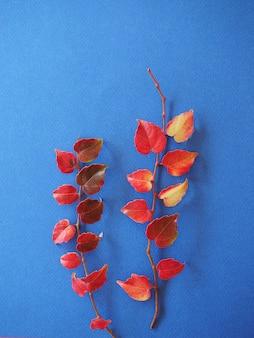 Deux branches de lierre avec des feuilles rouges sur fond bleu fond d'automne lumineux