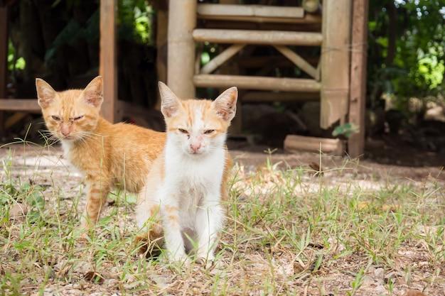 Deux chaton mongrel jaune sale assis sur le sol. vous cherchez à la caméra.