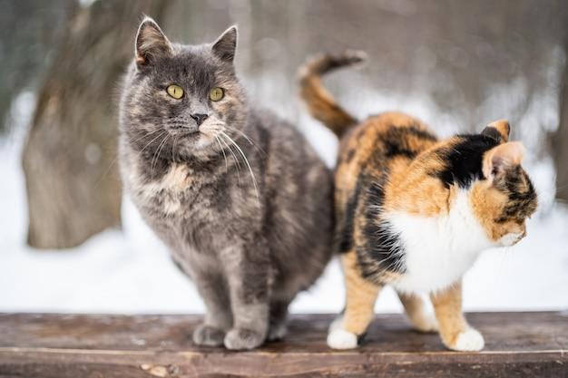 Deux chatons s'appuyant ensemble comme des amis