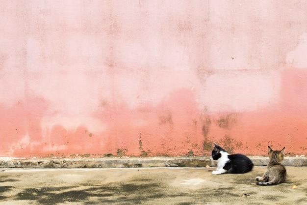 Deux chats de chat se reposent et jouent sur les murs de ciment de fond de planchers