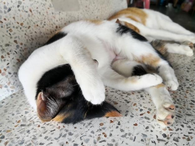 Deux chats dorment sur un banc en marbre.