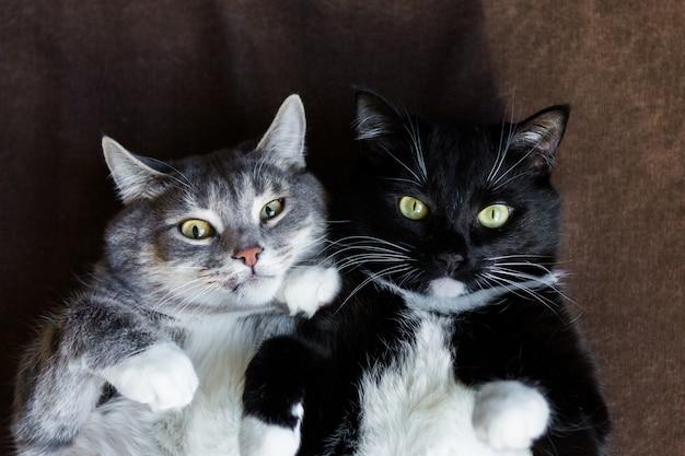 Deux chats ensemble gris et noir et blanc