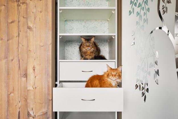 Deux chats explorant des étagères dans une armoire